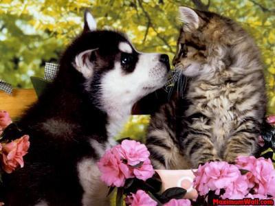 Univers cité du Chien (Université du chien)Mettre les connaissances