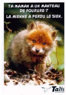 Animal le renard mon blog - Photo super drole ...